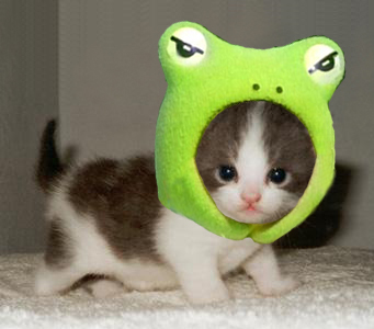 cutest little kitten and frog 1  Princess Margot & the Frog. Woodland Wisdom. Princess Florence
