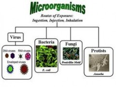 Microorganisms+pictures+with+names