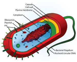 Prokaryotes+and+eukaryotes+similarities