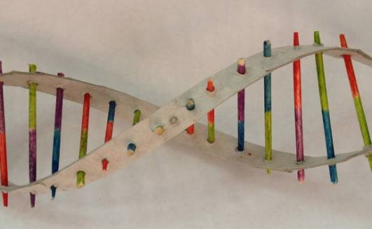 DNA Model Project Pipe...